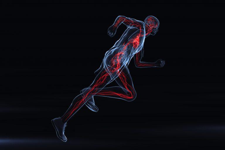 Sistemul vascular și efortul fizic